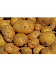 Pommes de terre Bintje...